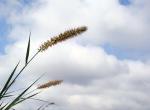 Rumput n langit